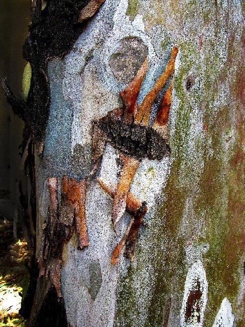 Nature morte 6, Fouzia ALAMI